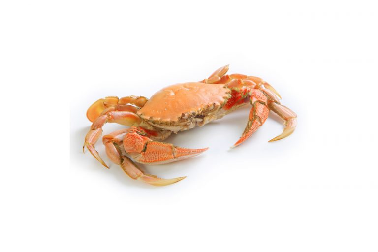 The crab/cancer, the zodiac sign for the month of Tammuz
