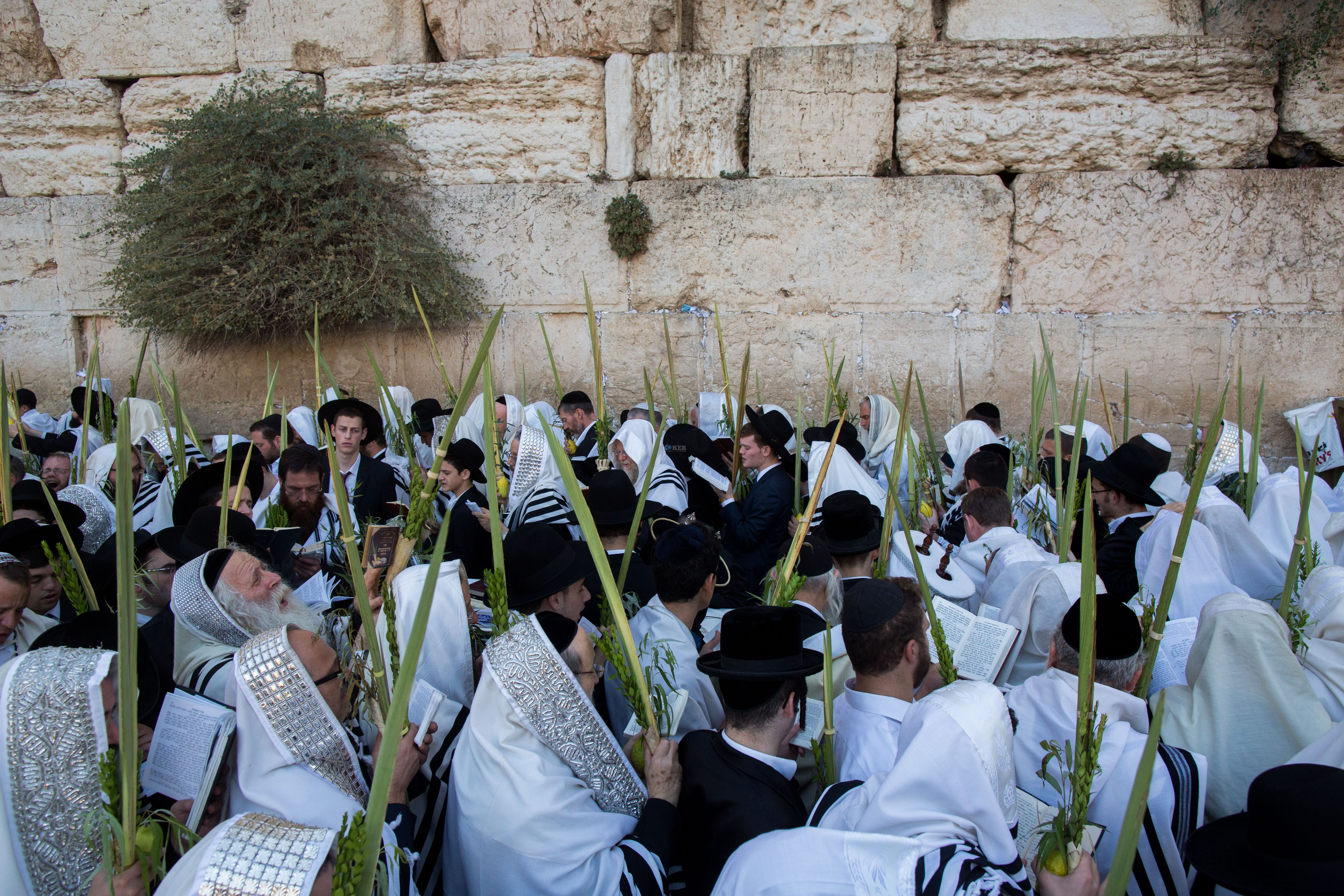 After shachris at the marina roscha chabad synagogue in moscow, russia, the congregants took bundles of five aravos and banged them on the ground five times, concluding the